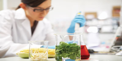 food safety Diploma